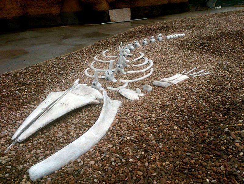 betonowy-szkielet-wieloryba-plaza
