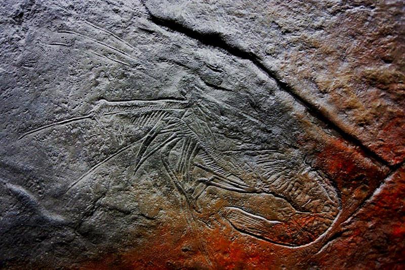 odcisk-skamieliny-beton