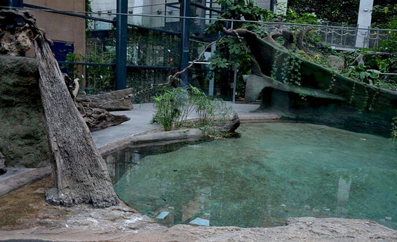 plaza-krokodyli